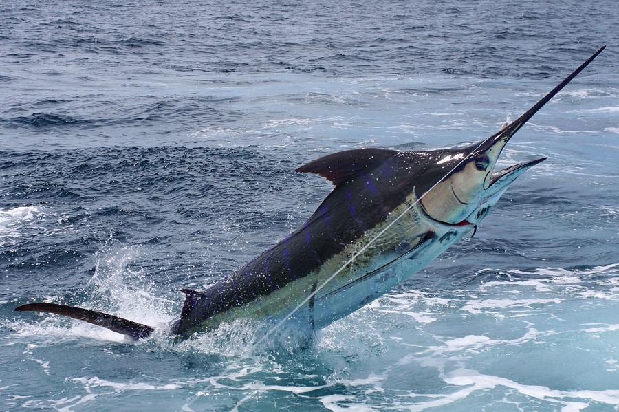 Aberta a temporada 2016/2017 de pesca oceânica no ES