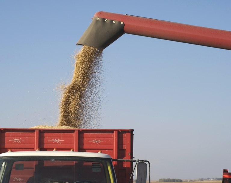 A receita das vendas da soja em grão, em abril deste ano, saltou de US$ 3,30 bilhões (abril/2019) para US$ 5,46 bilhões (abril/2020), crescimento de US$ 2,16 bilhões- Foto Reprodução