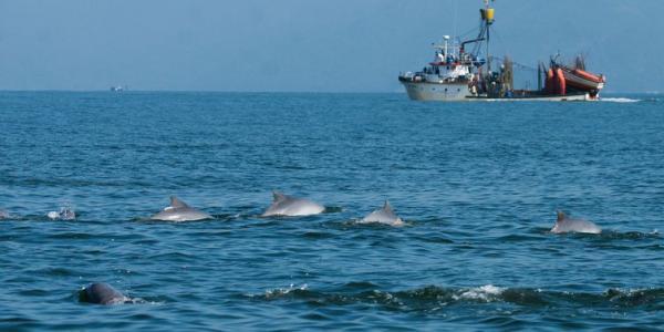 Marinha retoma buscas por desaparecidos em naufrágio no Rio