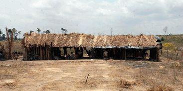 Fiscais do trabalho libertam grupo que levava gado a pé por 930 Km
